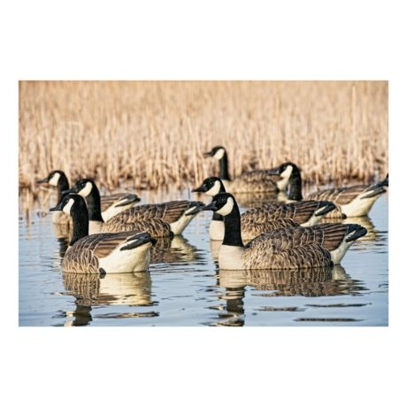 Avian-X Topflight Honker Floaters Goose Decoys - In the Field