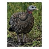 Picture for category Turkey & Crow Decoys