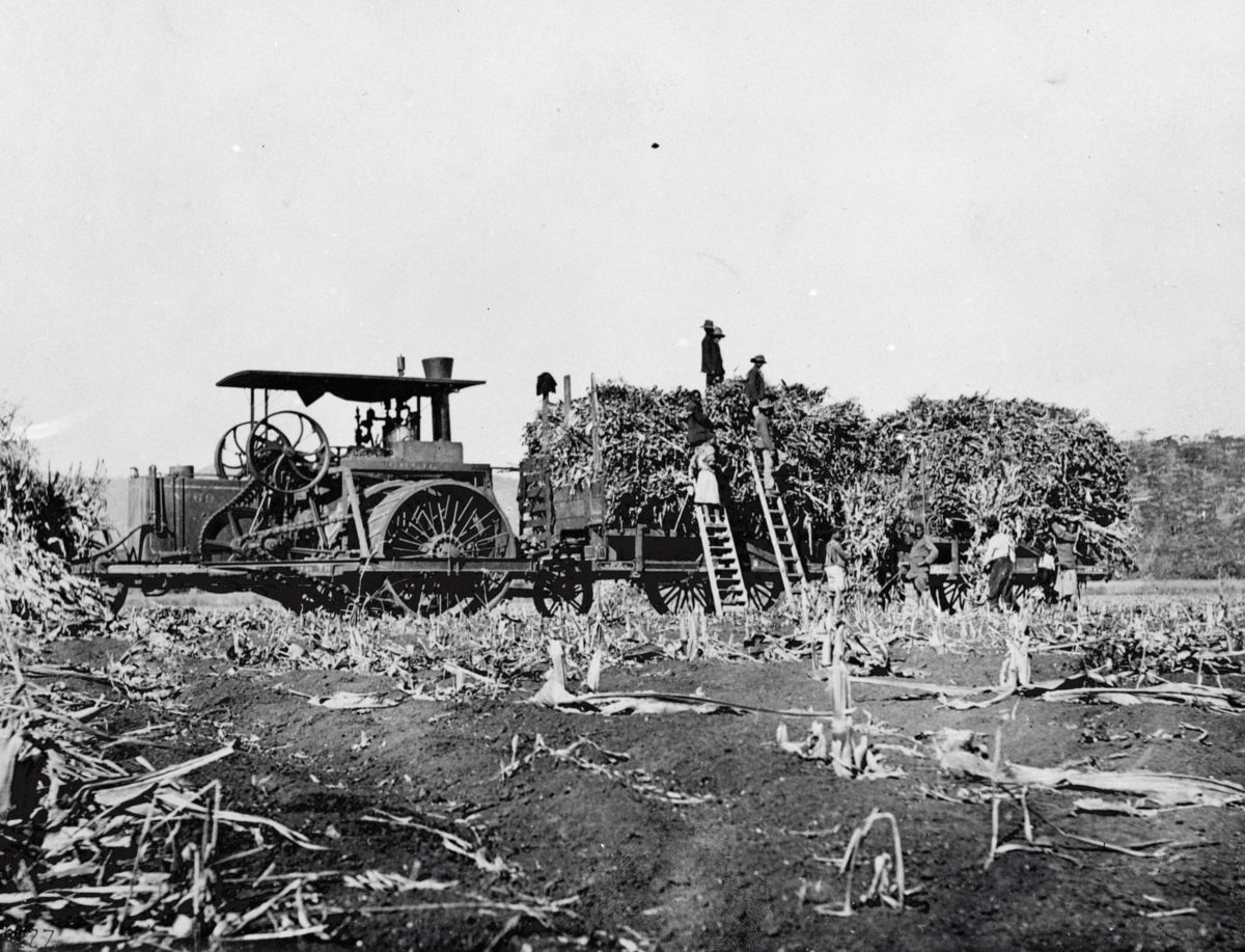 Primer producto Holt vendido en África, 1903.
