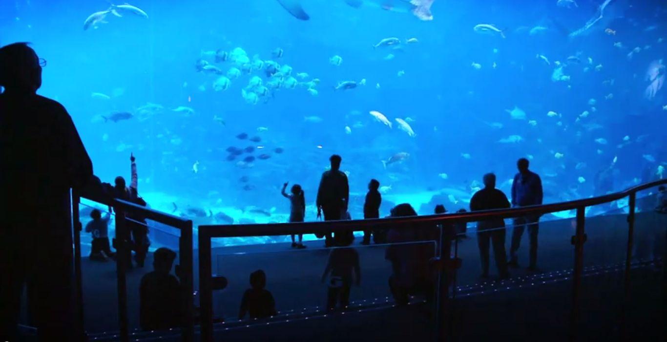 At the Georgia Aquarium, Penguins, Alligators, Whales & More Rely on Cat® Power