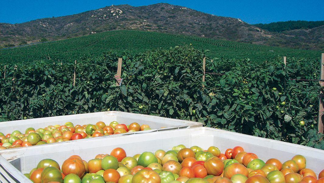 Alternateurs agricoles-pour exploitations agricoles | Alternateurs d'urgence