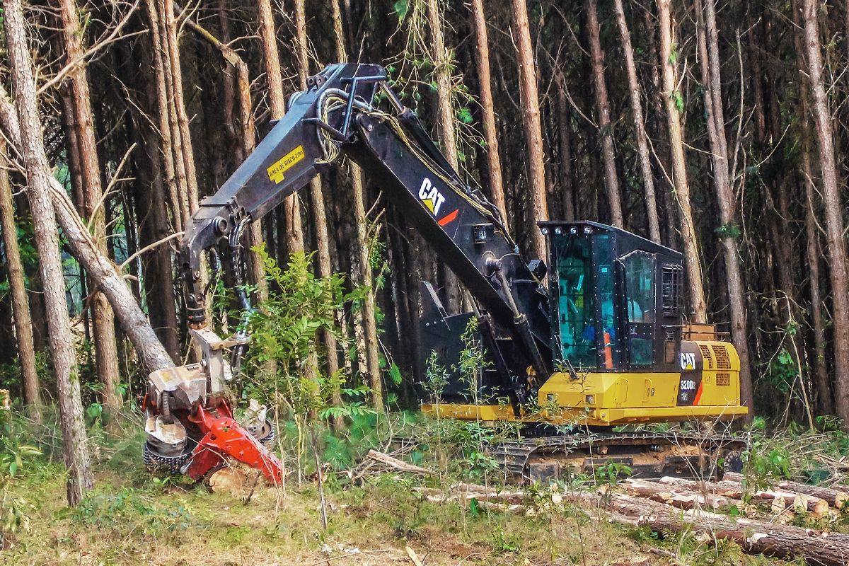 New Zealand | 4.99% Financing on New Cat® Forestry Machines