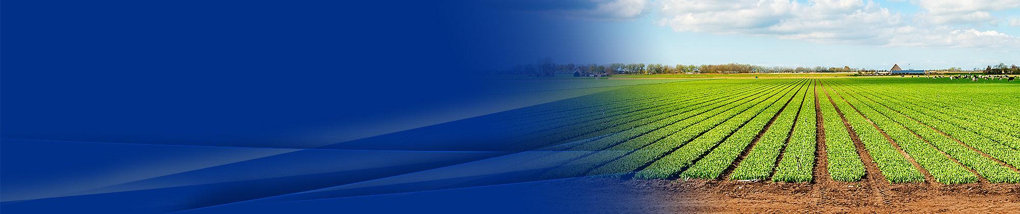 农业大标题