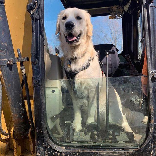 dog in cab of machine