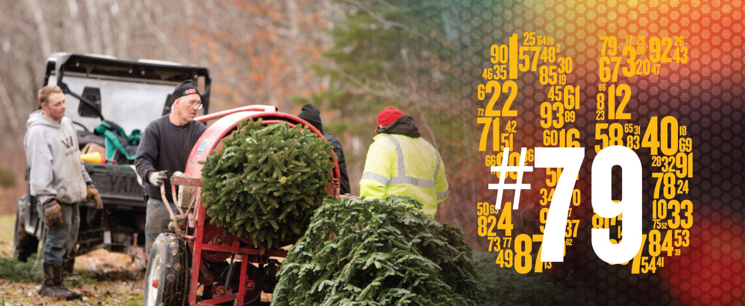 Allagash View Christmas Tree Farm in Maine