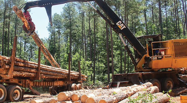 After Just a Few Years In Logging, Kip Smith is Quickly Making a Name for Himself