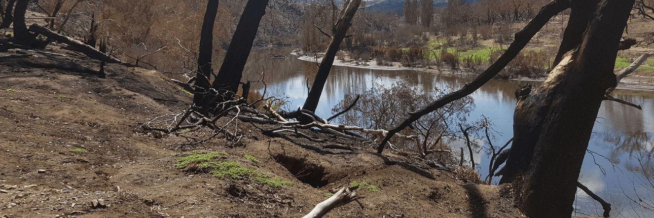 Strengthening Ecosystems Through River Rehabilitation