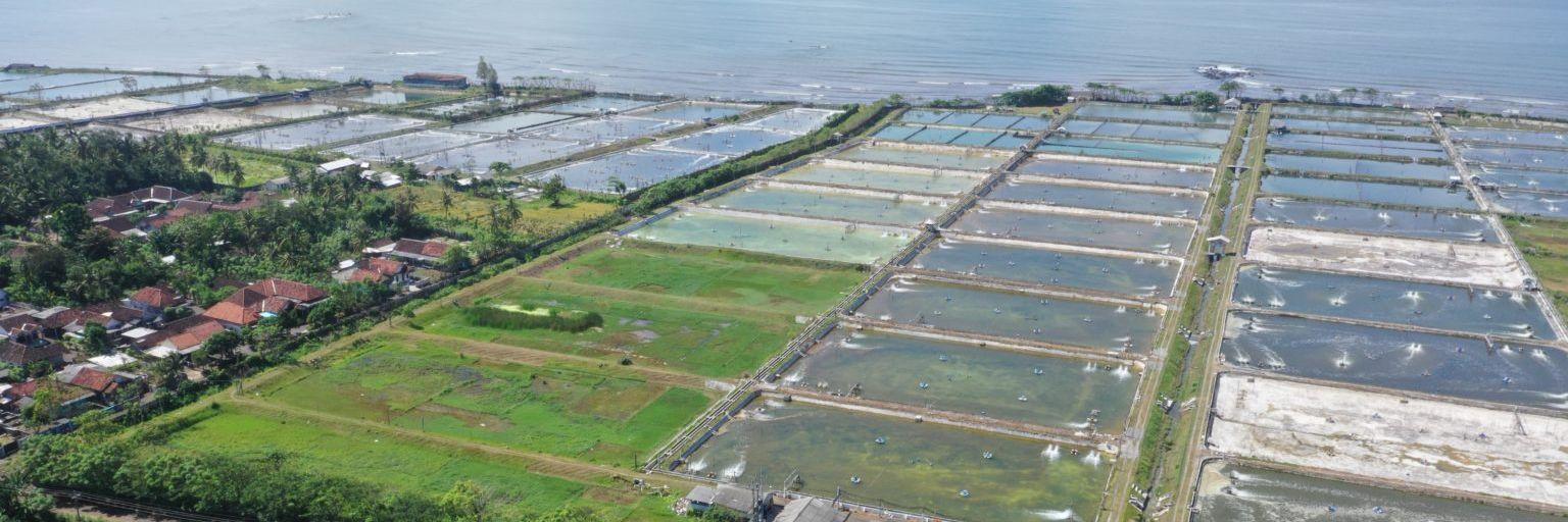 Creating More Sustainable Shrimp Farming