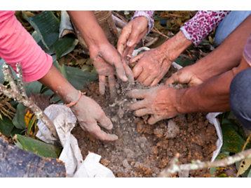 Projeto patrocinado pela Fundação Caterpillar ajuda a recuperar áreas degradadas do Sistema Cantareira, que fornece água para regiões de São Paulo, Campinas e Piracicaba.