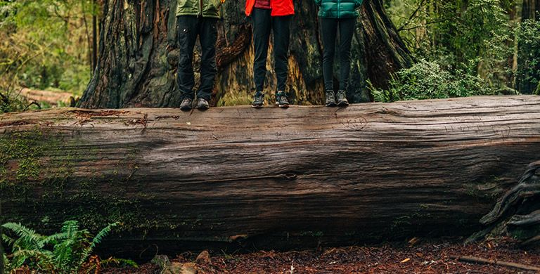Hikers standing on a log in the forest.