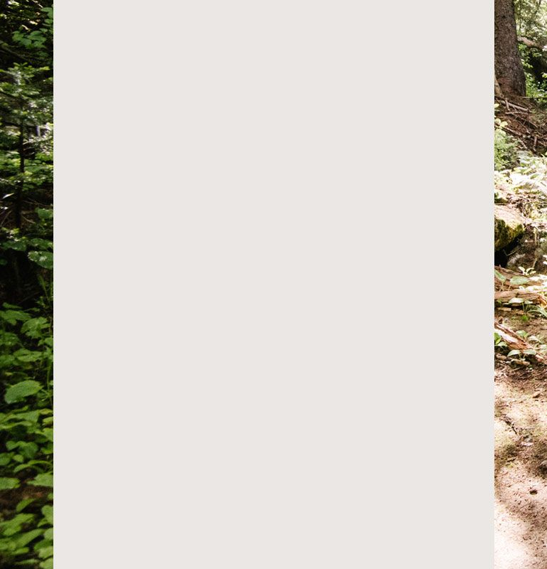 0def535ee5f79 A woman hiking in the woods