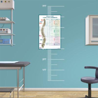 Skeletal System - Front