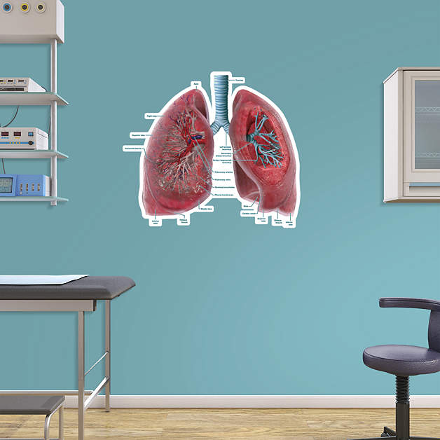 anatomical wall charts medical wall decals from fathead