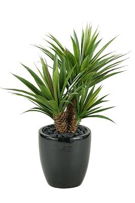 Star Succulent Black Planter