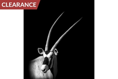 Silver Oryx Canvas I