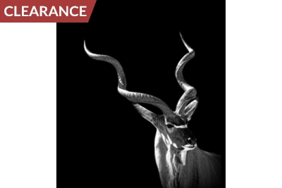 Silver Oryx Canvas II