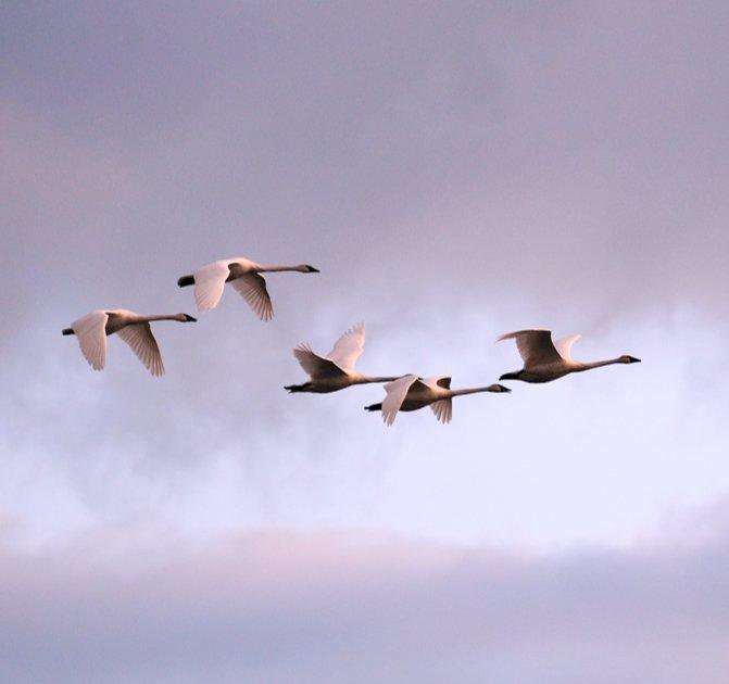 birdies soaring