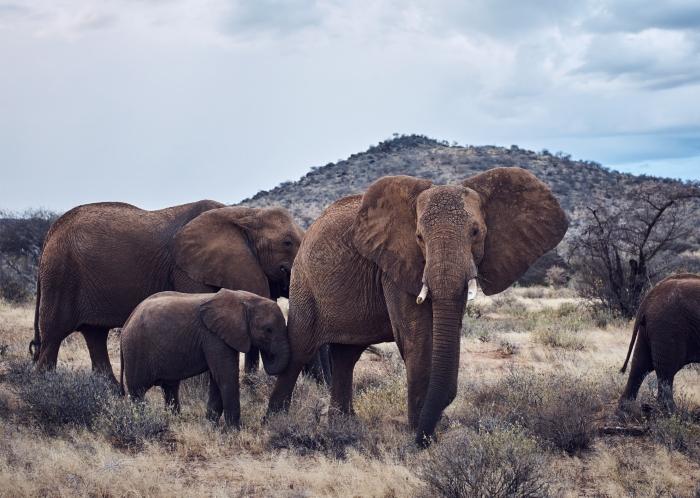 Holt Renfrew Image of Elephants