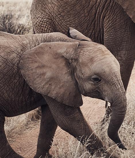 Holt Renfrew Image Of Elephants.