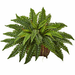 Boston Fern In Metallic Planter