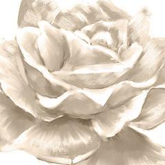 PTM Images™ White Roses II Wall Art