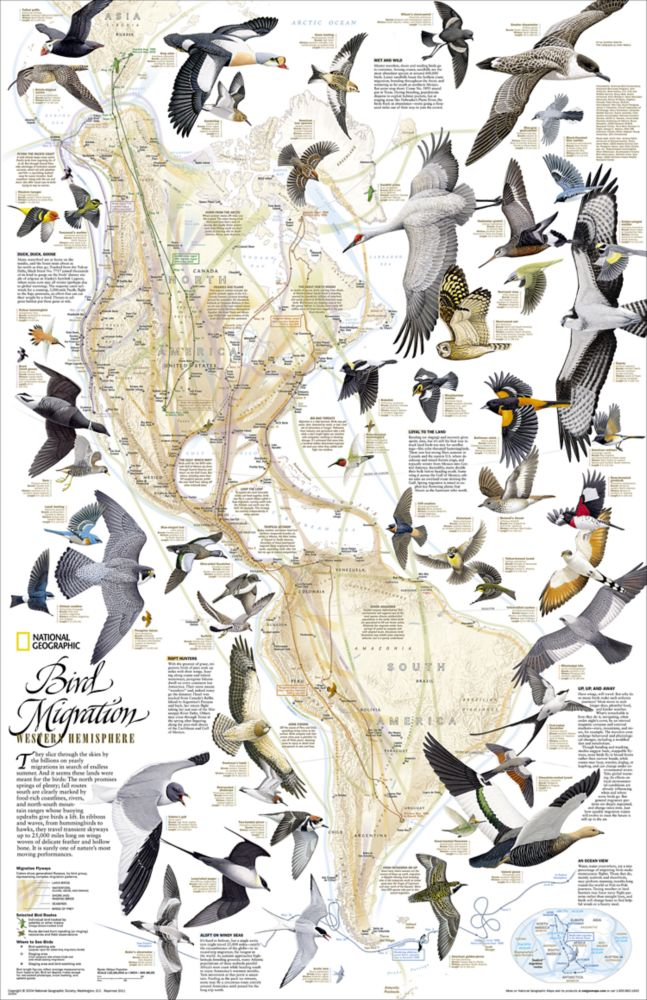National Geographic Field Guide to the Birds of North America – National Geographic Travel Map