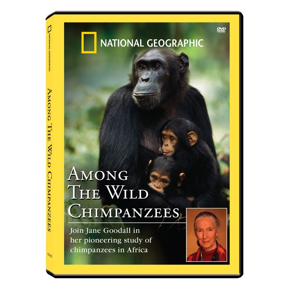 jane goodall my life with chimpanzees dvd exclusive national geographic store. Black Bedroom Furniture Sets. Home Design Ideas