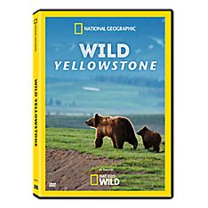 Wild Yellowstone DVD