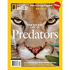 Nat Geo Wild: The Secret Life of Predators
