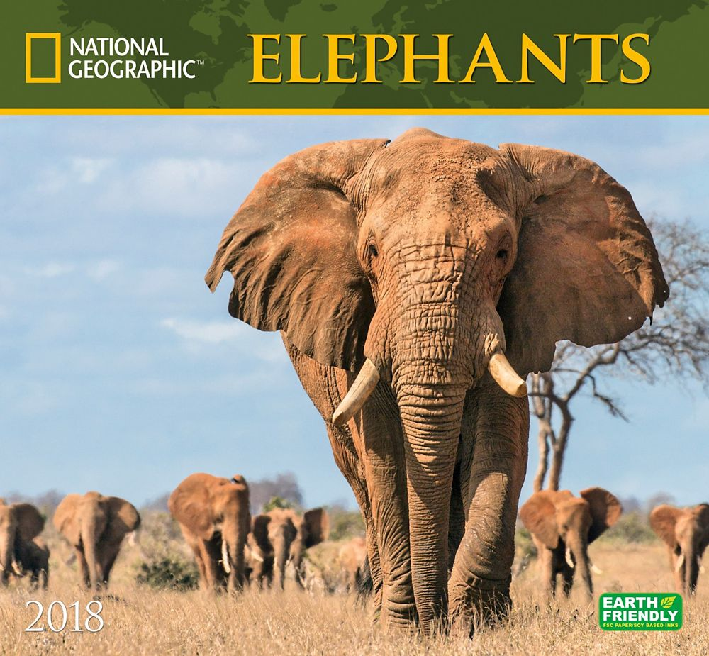 2018 National Geographic Elephants Wall Calendar