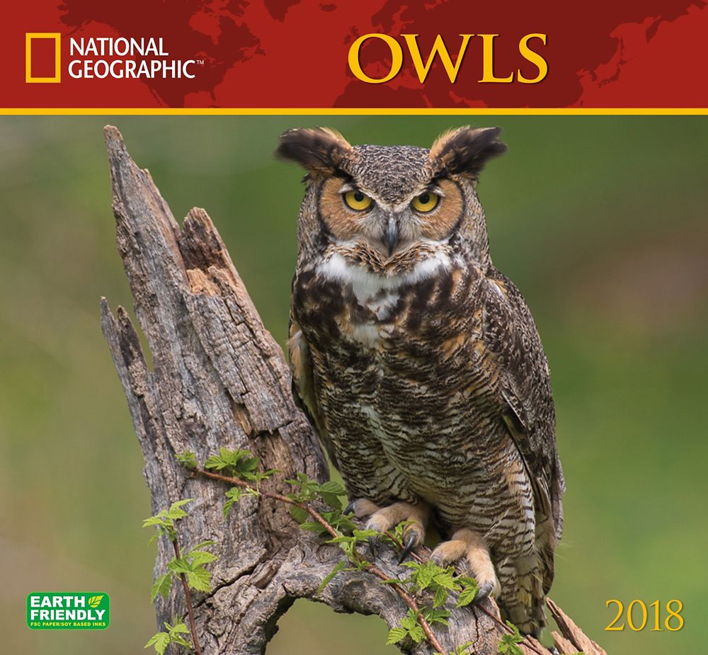 2018 National Geographic Owls Wall Calendar