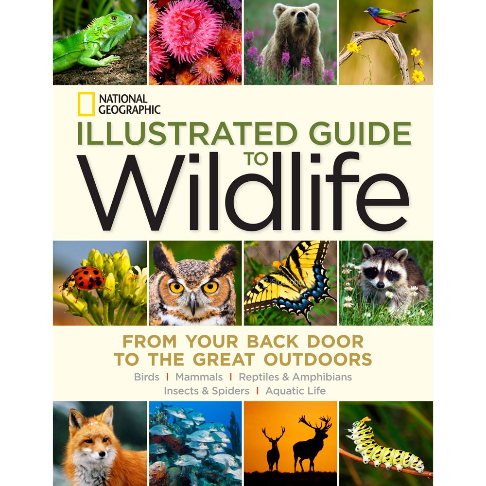 Animal Guide: National Geographic Birds, Bees, And Butterflies