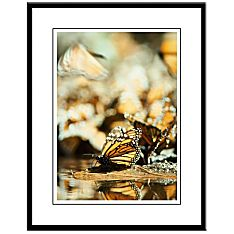 great migrations photographic prints