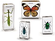 Insects Specimen Set
