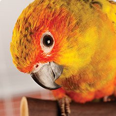 Parakeets at Petco, for instance, retail for about $5 to $29, depending on the time of year and species you adopt. For example, a normal scarlet chested parakeet can cost anywhere from $ to $, while a rosy Bourke can cost anywhere from $75 to $; a Rubino female can cost upwards of $