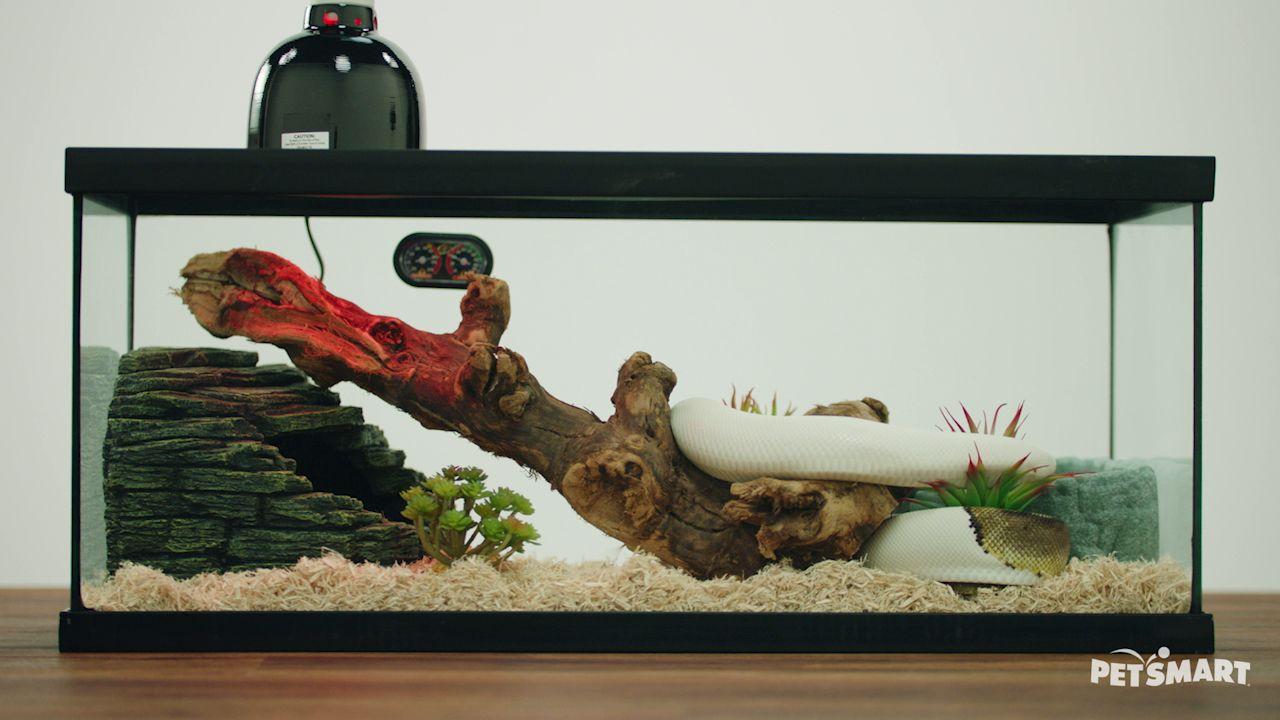 Zoo Med ReptiHabitat Snake Terrarium Kit | reptile Terrariums | PetSmart