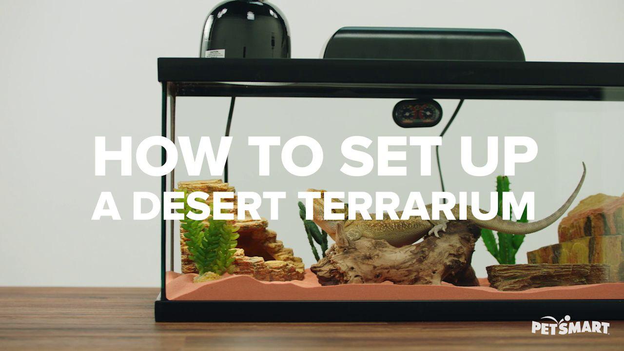 Zoo Med Reptihabitat Leopard Gecko Terrarium Kit Reptile Terrariums Petsmart