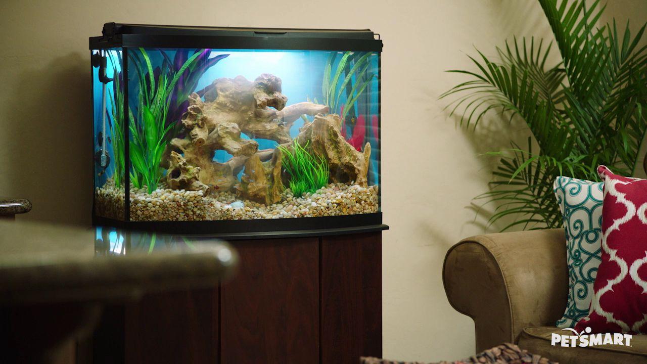 Seaclear 50 Gallon Aquarium Combo Fish Aquariums Petsmart