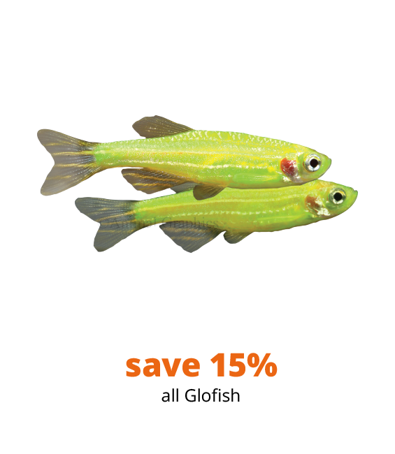 save 15% all GloFish
