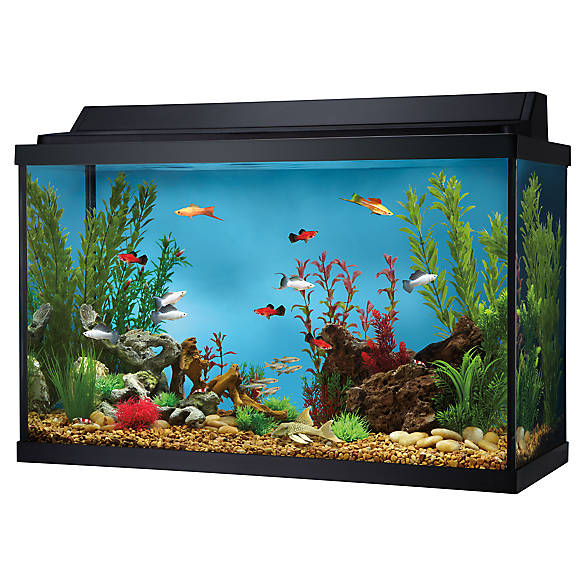 Top fin 29 gallon hooded aquarium fish aquariums petsmart for 29 gallon fish tank