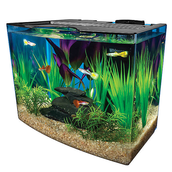 Marineland 3 gallon nook aquarium system fish starter for Petsmart fish tank stand