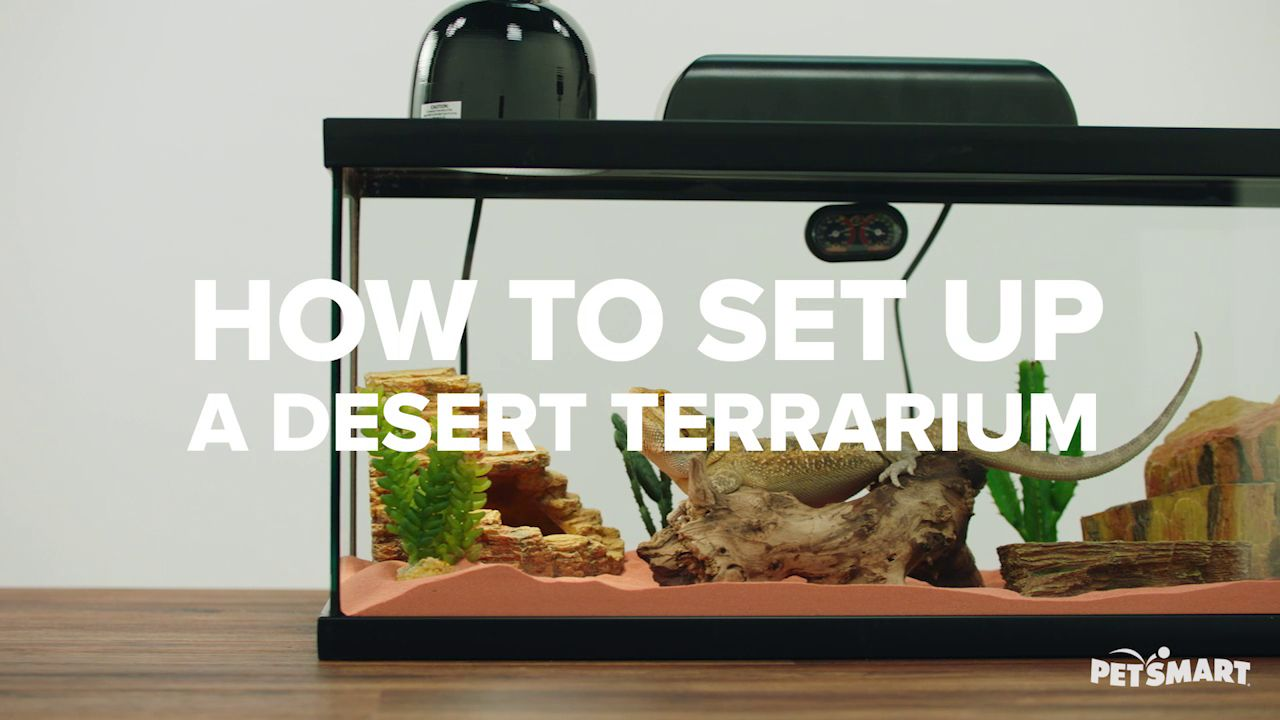 Zoo Med Reptihabitat Desert Kit 10 Galllon Reptile Terrariums Petsmart
