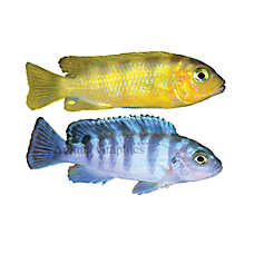 CAN YOU RETURN LIVE FISH TO PETSMART