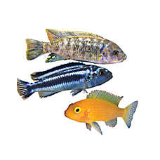 save 15%  all mollys, platys, tetras & cichlids