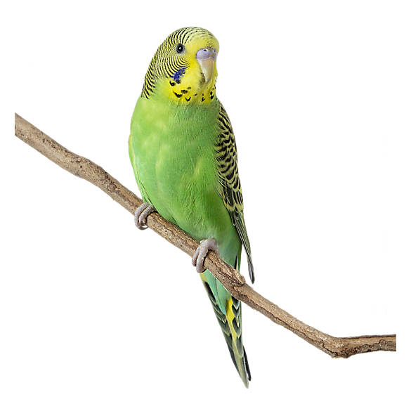 Pet Birds for Sale: Finches, Parakeets, Conures & More | PetSmart