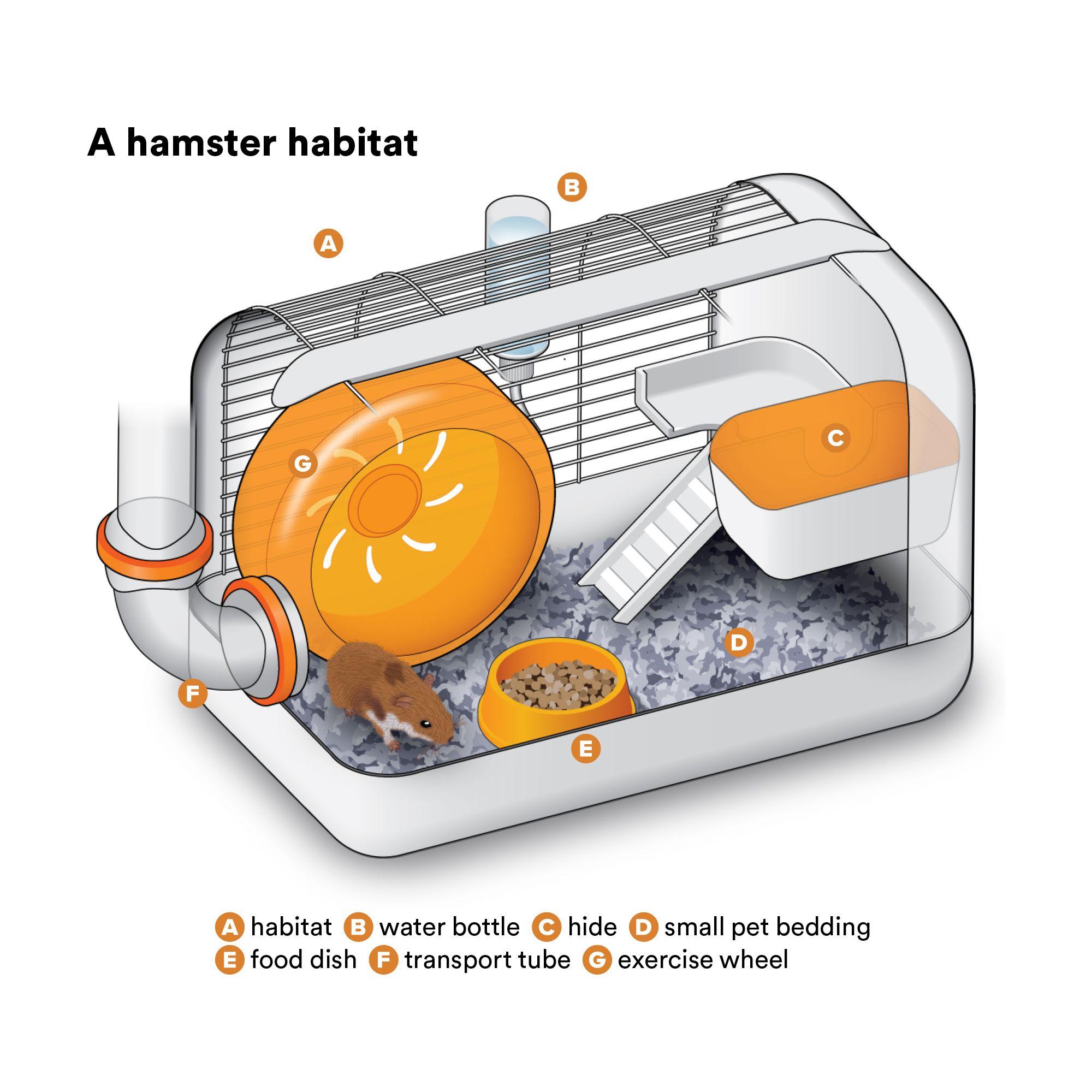 Long Haired Hamster Petsmart 17