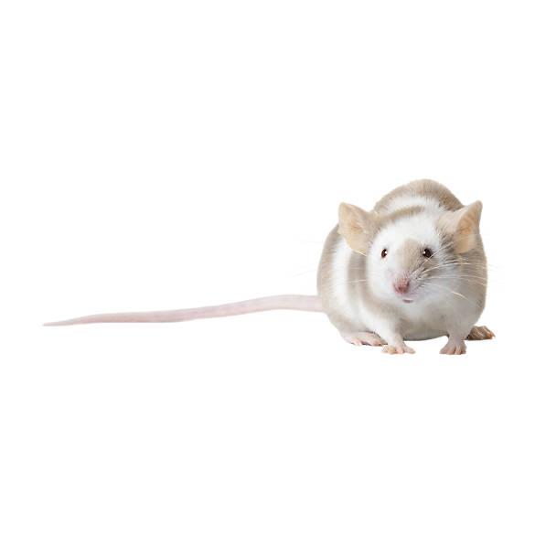 fancy mouse care sheet supplies petsmart
