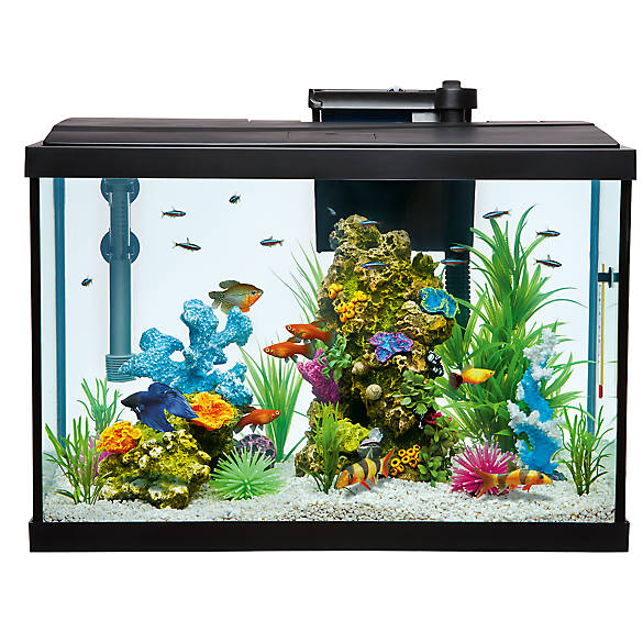 Top fin aquarium starter kit fish starter kits petsmart for 20 gallon fish tank kit
