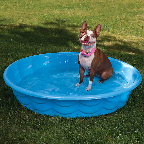 Summer Escapes Poly Pool Pet Bath Dog Bathing Equipment Petsmart