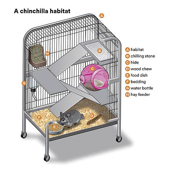 Female Chinchilla For Sale Live Small Pets Petsmart